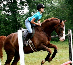 equestrian-jumping