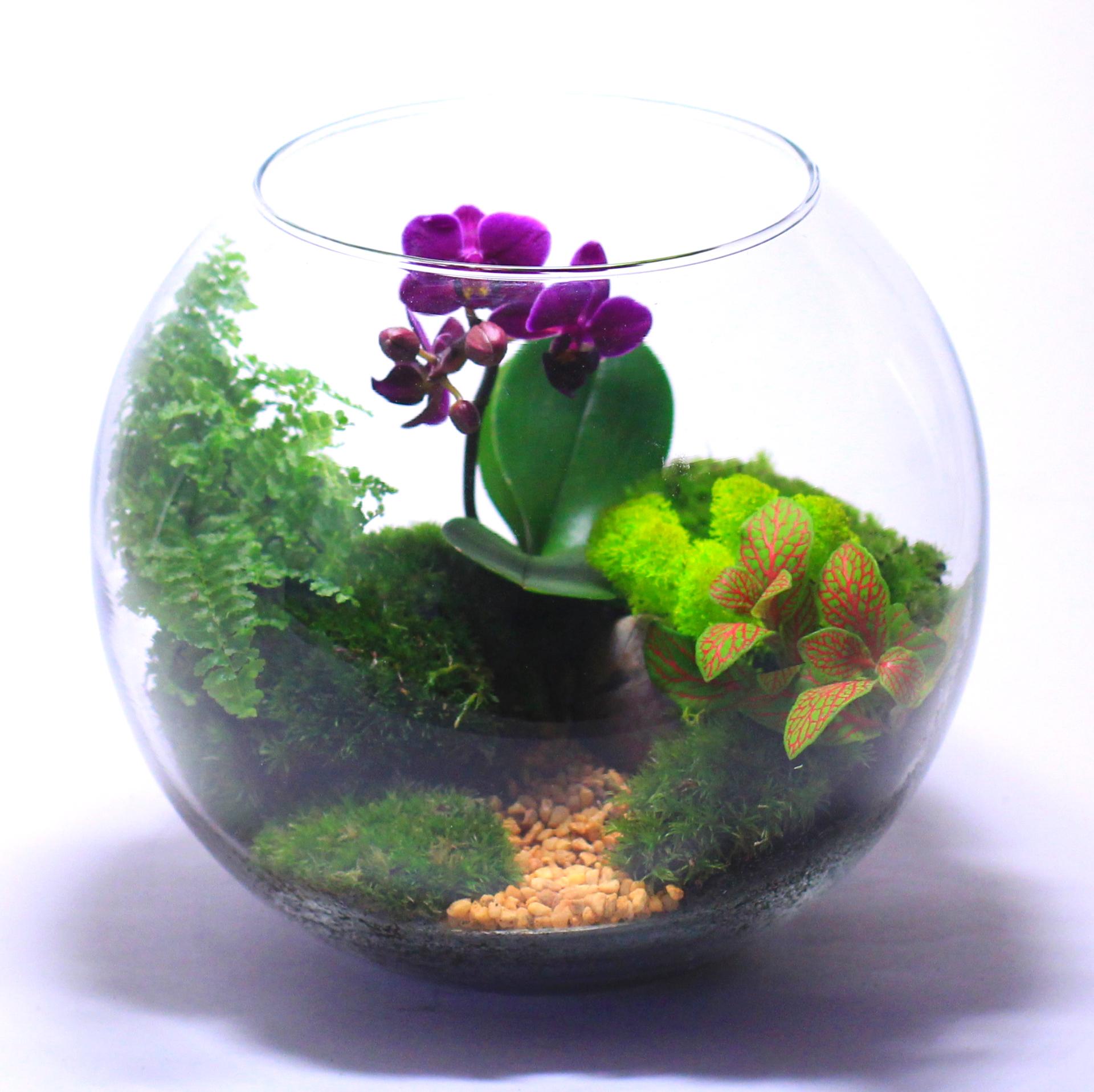 Флорариум своими руками пошаговая инструкция с фото в круглой емкости 65