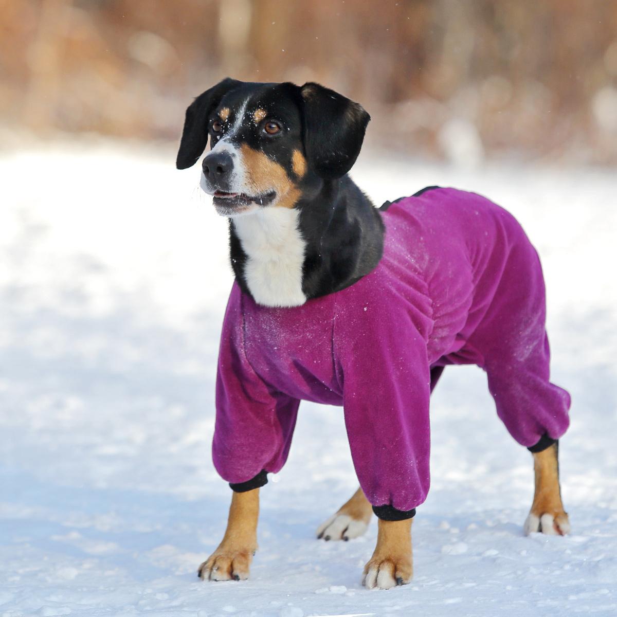 Одежда для великих собак