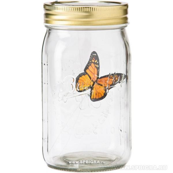 Бабочка в банке в саратове