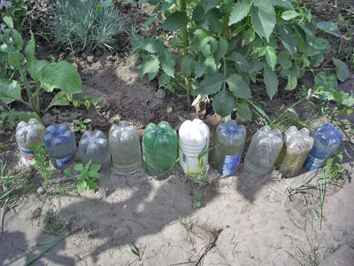Поделки для сада из пластиковых бутылок: декоративный забор