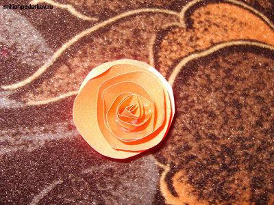 Отросток розы
