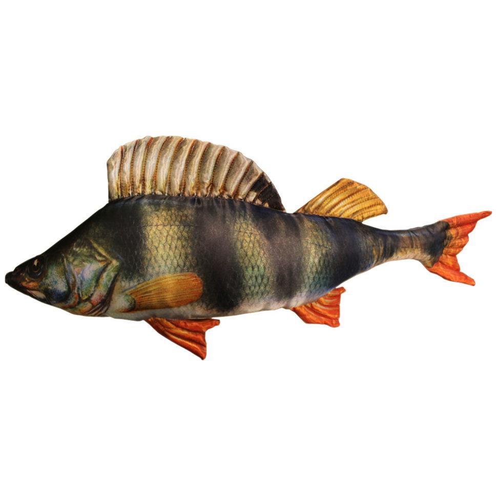 картинки рыба окунь на белом фоне вам пригляделась